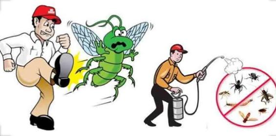ارخص شركة مكافحة حشرات بتبوك،شركة مكافحة حشرات بتبوك